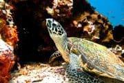 Komodo scuba diving